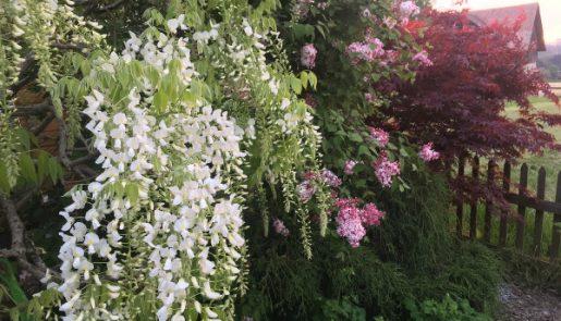 Blütenkombination
